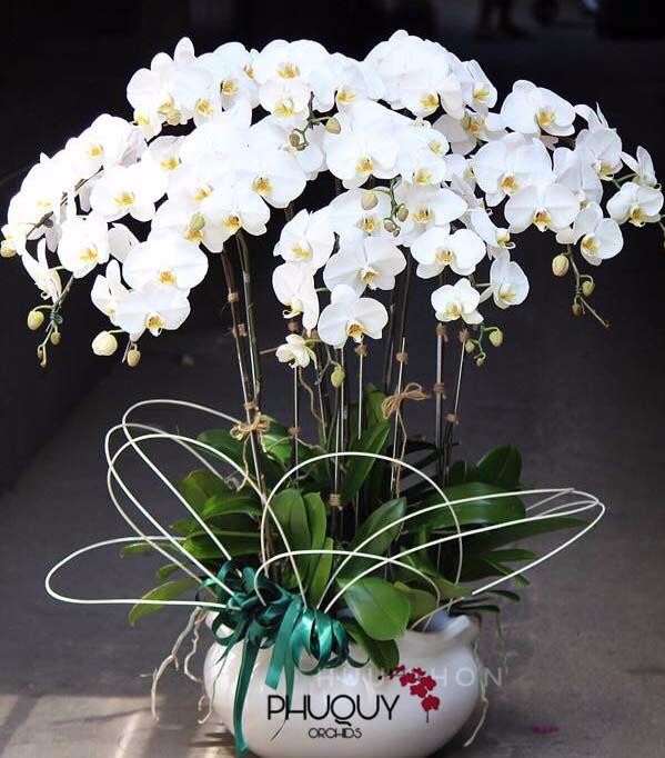 chau-lan-ho-diep-trang-phu-quy-tai-loc-2-2003