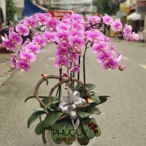 chau-lan-ho-diep-tim-hong-phat-5-140920