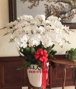 chau-lan-ho-diep-trang-Phu-Quy-Tai-Loc-20a-101020