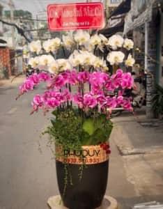chau-lan-ho-diep-trang-tim-ket-hop-cat-tuong-nhu-y-20-291220