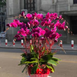 chau-lan-ho-diep-tim-hanh-phuc-an-khang-10a-060221
