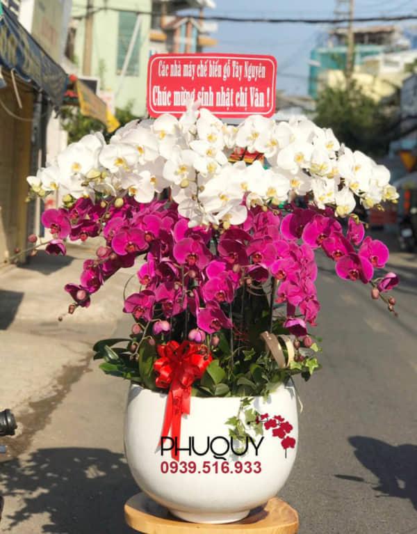chau-lan-ho-diep-trang-tim-ket-hop-an-khang-thinh-vuong-18-060221
