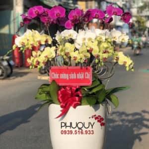 chau-lan-ho-diep-trang-tim-ket-hop-thinh-phat-16-220221