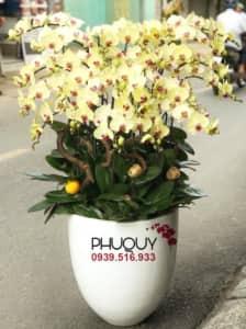 chau-lan-ho-diep-vang-an-khang-thinh-vuong-20-070221