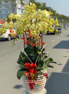 chau-lan-ho-diep-vang-thinh-phat-10-070221