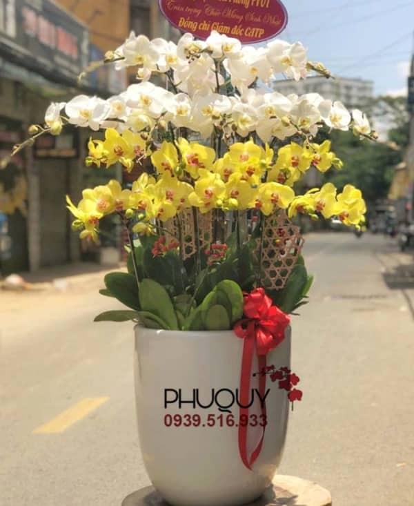 chau-lan-ho-diep-trang-vang-ket-hop-thanh-cong-nhu-y-17-060621