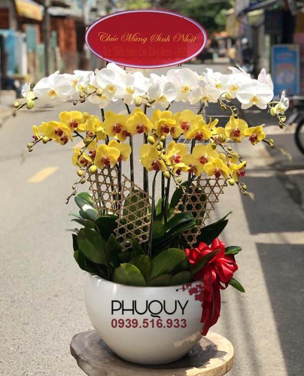 chau-lan-ho-diep-trang-vang-ket-hop-thinh-phat-13c-180621