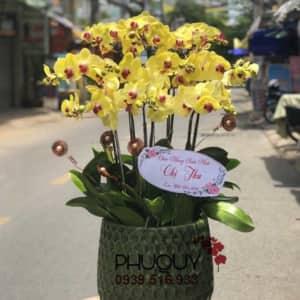 chau-lan-ho-diep-vang-phu-quy-vinh-hien-10-070621