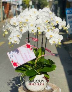 chau-lan-ho-diep-cat-loc-phu-quy-7-151021